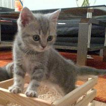 die kleine Maus in ihrer Kiste