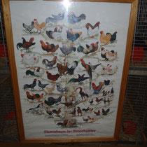 Stammbaum aller Hühnerrassen