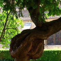 Beaune: Garten hinter der Basilika »Notre-Dame«