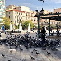 Widersprüchliche Tradition: Taubenfüttern