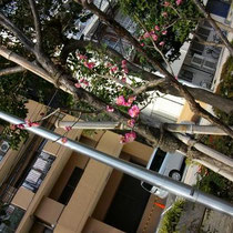 梅も咲いてた~