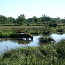 """Naturschutzgebiet """"Petite Camargue"""" bei St. Louis."""