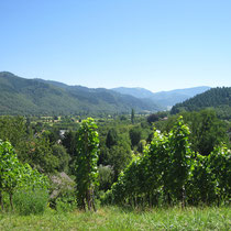 Vor der Kulisse des Schwarzwalds, Belchen, Wandern in den Reben