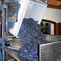 maschinelle Weinproduktion