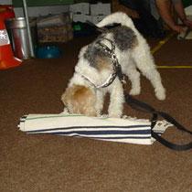 Haushalthund