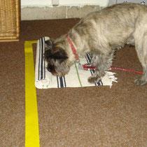 Gonzo beim Teppich rollen