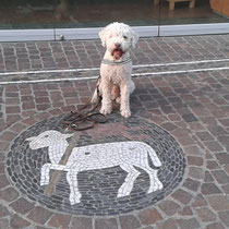 Schaf oder Hund oder doch Wolf im Schafspelz? Freiburg