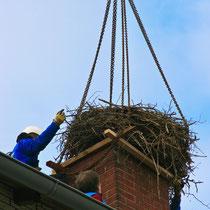 Vorsichtig wird das alte Nest abgetragen