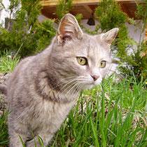 Katze Murli - immmer auf der Hut!