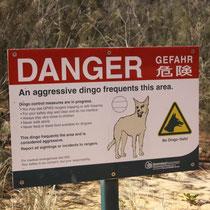 Achtung Dingos!