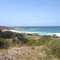 Pippi Beach