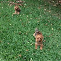 Unsere Hunde Mukyia und Toto