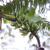 ..und Bananen (man waren die lecker!)