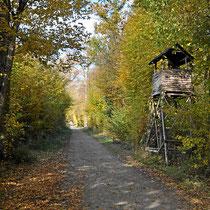 Wanderwege in den Wäldern am Rhein