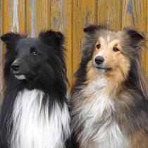 Kyna und Ponie