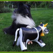Das ist MEINE neue Coloversum-Kuh.