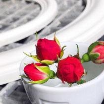 Statt Guns'n'Roses gehen wir den pazifistischen Weg und sagen: Rings'n'Roses!