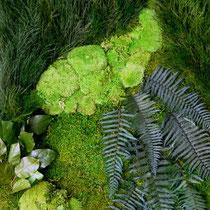 Mur végétal STABILISE  sur mesure