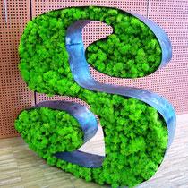 Lettrage stabilisé (lychen vert citrion et acier)