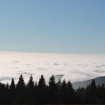 Ausblick vom Waldwipfelweg Maibrunn
