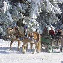 Pferdeschlittenfahrt im Winter in Maibrunn