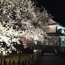 三の丸広場の桜と石川門