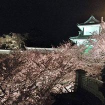 兼六園桂坂入り口から望む石川門と夜桜
