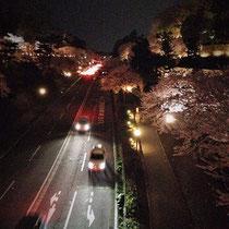 お堀通りと沈床園の夜桜