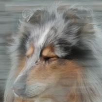 Lambiek in de wind