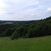 Waldbröler Waldblick