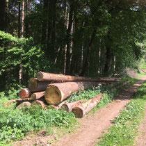 Holzpolter Mai 2018