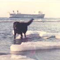 The newfoundlend Ceggi Kondor (1980-1994). He was a real Saint Jones dog - ready to swim even in winter time!