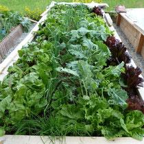 Landhaus Wildfeuer: Gesundes Gemüse - frisch aus dem Garten!