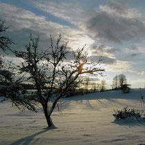 Landhaus Wildfeuer: Winter-Landschaft