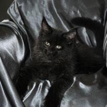 Moshe, solid black, male