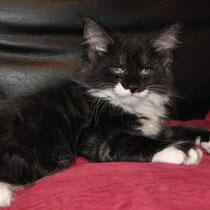 Tux Bodashka Relph, black smoke & white, male
