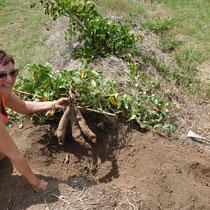 ma manucure en a pris un coup, je suis couverte de terre, mais fière!