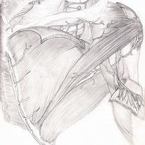 Aquila-images-Boaz-George-medical-illustration-Scapula- Region-Intermuscular-Spaces