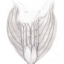 Aquila-images-Boaz-George-medical-illustration-Deltoid-Muscle