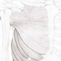 Aquila-images-Boaz-George-medical-illustration-Pectoralis-Major