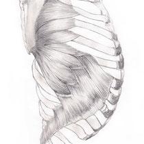 Aquila-images-Boaz-George-medical-illustration-Serratus- Anterior