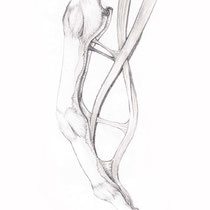 Aquila-images-Boaz-George-medical-illustration-Flexor-Tendons-of-Finger