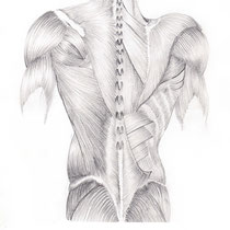 Aquila-images-Boaz-George-medical-illustration-Muscles-of-Back