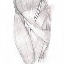 Aquila-images-Boaz-George-medical-illustration-Cubital-Fossa-Contents