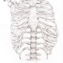 Aquila-images-Boaz-George-medical-illustration-Rib-cage