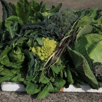 自家農園野菜収獲