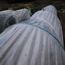 自家農園トンネル栽培