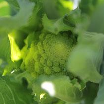 自家農園野菜ロマネスコ