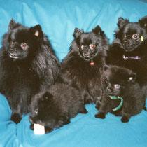 Wolfi, Miggeli, Daily und ihre zwei letzten Welpen