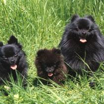 Daily, Miggeli und Wolfi